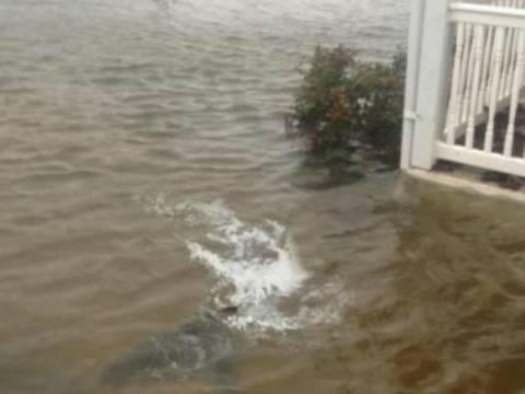 Βίντεο: Δείτε τον άνθρωπο που έκανε τον καρχαρία στον τυφώνα Σάντι