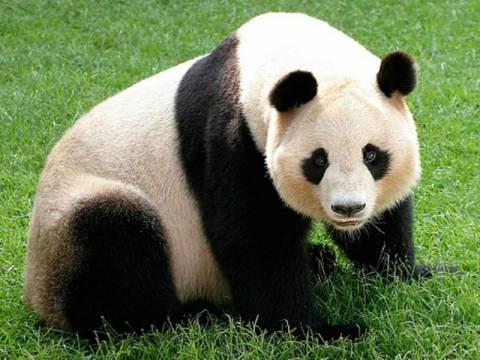 Τα πιο... μοχθηρά ζώα του πλανήτη