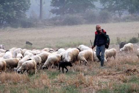 ΥΠΑΑΤ: 25 εκατ. € για ενίσχυση της κτηνοτροφίας