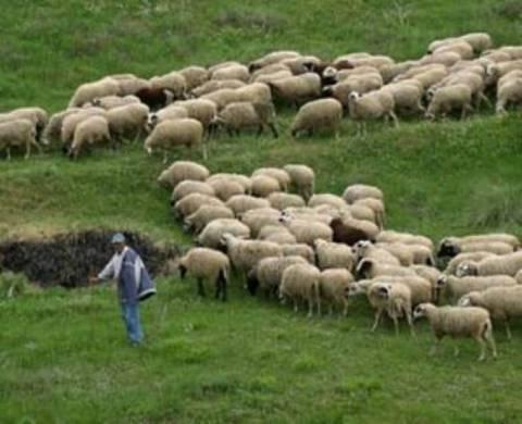 Οι κτηνοτρόφοι βγαίνουν στους δρόμους