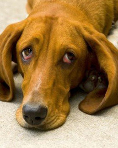 Σκυλάκια με βλέμμα γεμάτο ενοχή