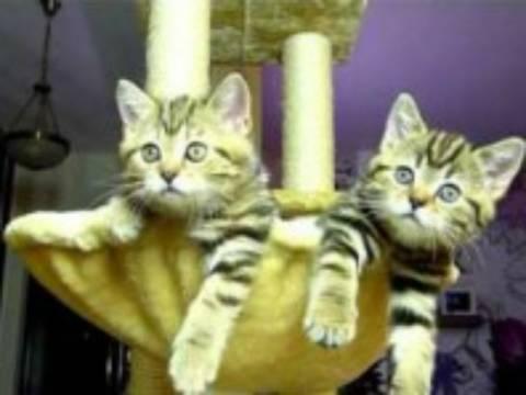 Το πιο αστείο βίντεο με γατάκια που έχετε δει