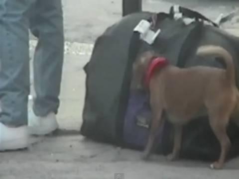 Ξεκαρδιστικό βίντεο: Ο σκύλος... πορτοφολάκιας!