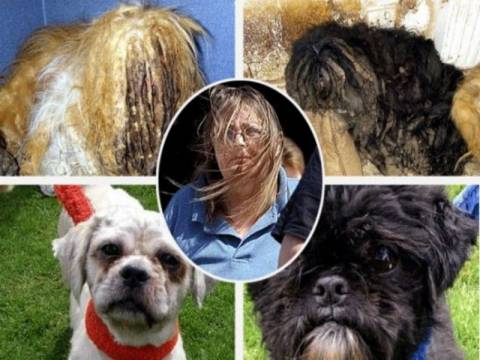 Τραγικό: Άφησε τα σκυλάκια της σε αξιοθρήνητη κατάσταση!