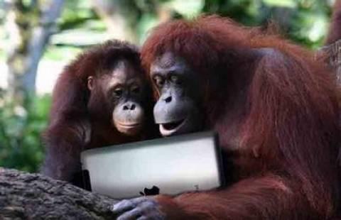 Απίστευτο! Οι πίθηκοι τρελαίνονται...για iPad!
