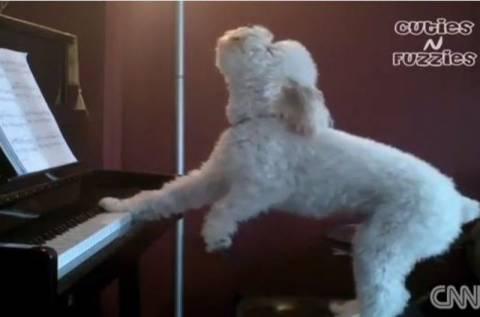 Βίντεο: Σκύλος με ταλέντο στο... τραγούδι