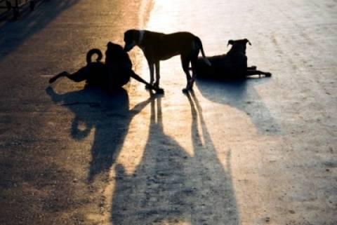 Ξάνθη: Νεκρά 15 σκυλιά από φόλα