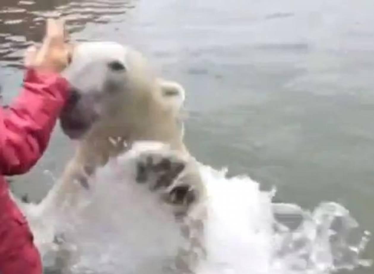 Βίντεο: Η πολική αρκούδα που εμφανίστηκε από το πουθενά