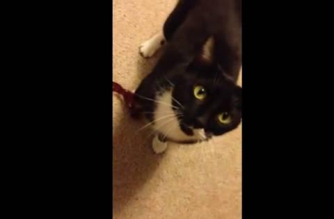 Δείτε τη γάτα που κάνει παρκούρ! (βίντεο)