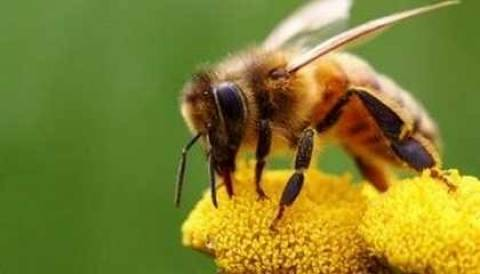Η προφητεία του Αϊνστάιν...για τη σημασία εξαφάνισης μελισσών!