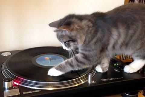 Ξεκαρδιστικό βίντεο: Η γάτα... DJ!