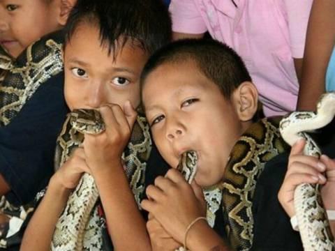 ΣΟΚ:Παιδιά βάζουν στο στόμα τους δηλητηριώδεις κόμπρες (vid)