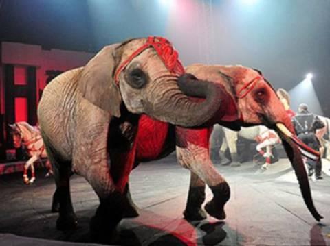 Η βότκα έσωσε τη ζωή δύο ελεφάντων!