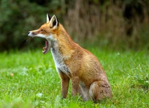 «Κρούουν τον κώδωνα» για τα κρούσματα λύσσας στο Κιλκίς!