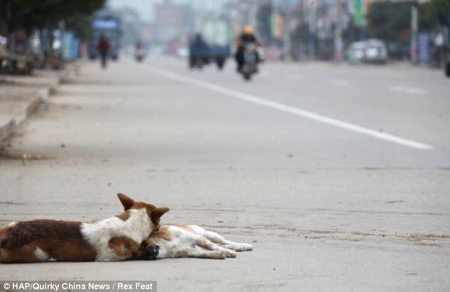 Σκύλος στεκόταν επί 6 ώρες στο πλευρό της νεκρής αγαπημένης του
