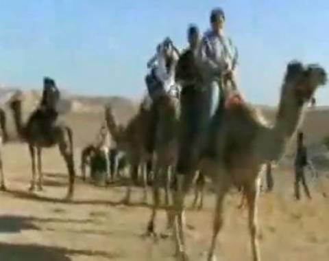 Απίστευτο βίντεο: Καμήλα λύγισε... στο βαρύ φορτίο
