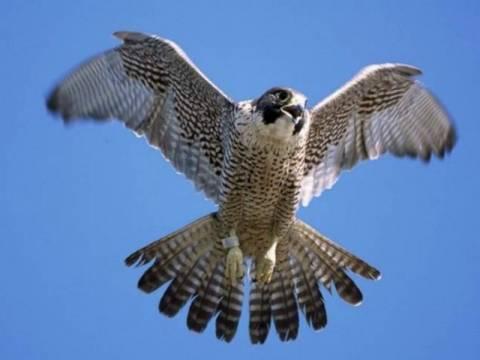 ΣΟΚ: Κάνουν σκοποβολή σε αρπακτικά πουλιά