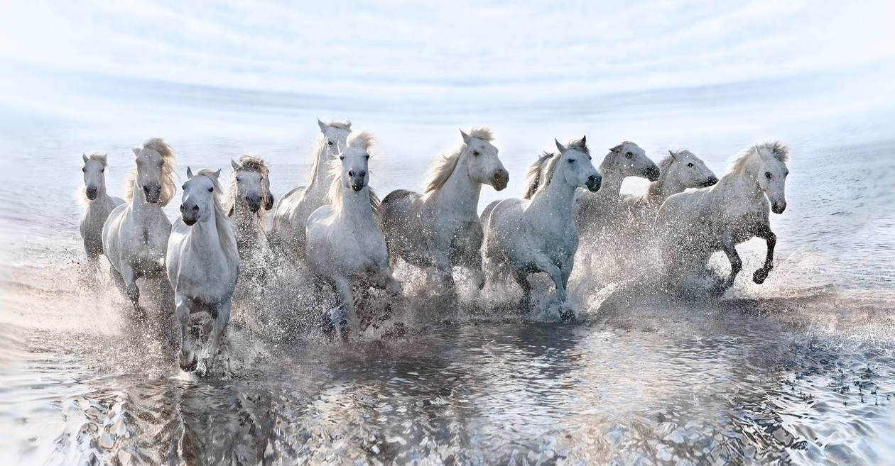 Εκπληκτικές εικόνες: Λευκά άλογα τρέχουν στη θάλασσα!