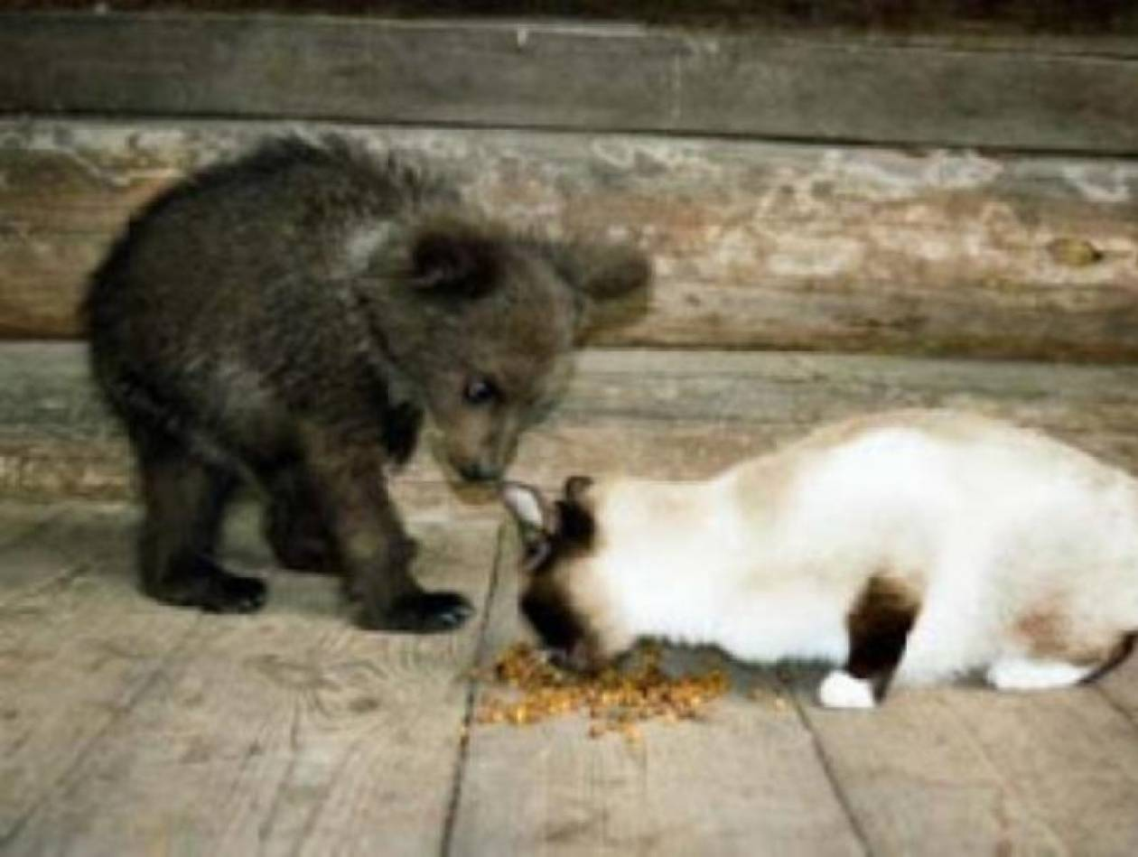 Έχουν  για κατοικίδιο ένα... αρκουδάκι(pics)