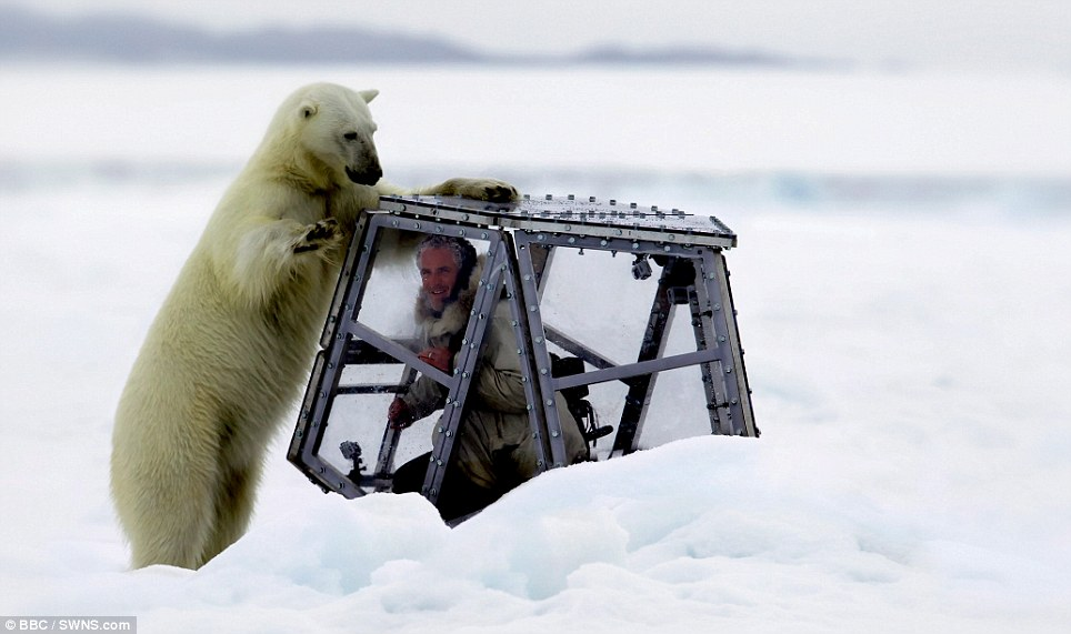 ΣΟΚΑΡΙΣΤΙΚΟ βίντεο: Στα σαγόνια μιας πεινασμένης πολικής αρκούδας