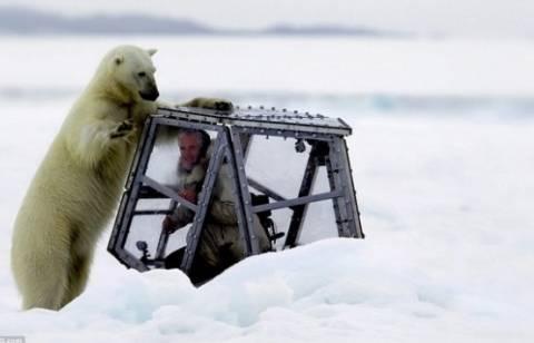 Bίντεο: Βρέθηκε αντιμέτωπος με μία πεινασμένη πολική αρκούδα!
