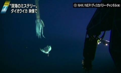 Κινηματογράφησαν γιγάντιο καλαμάρι στην άβυσσο του Ειρηνικού