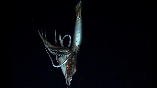 Δείτε τις πρώτες φωτογραφίες του γιγάντιου καλαμαριού