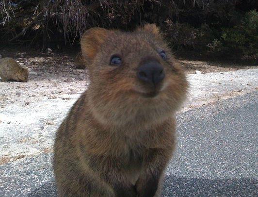 Το πιο ευτυχισμένο ζώο στον κόσμο (pics)