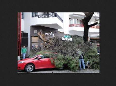 Δέντρο έπεσε και καταπλάκωσε οχήματα στην Ξάνθη!