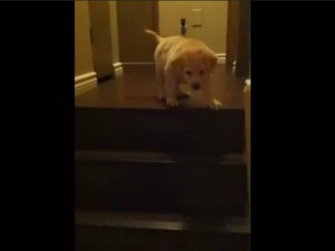 Εκπληκτικό βίντεο: Σκύλος μαθαίνει σε κουτάβι να κατεβαίνει τα σκαλιά