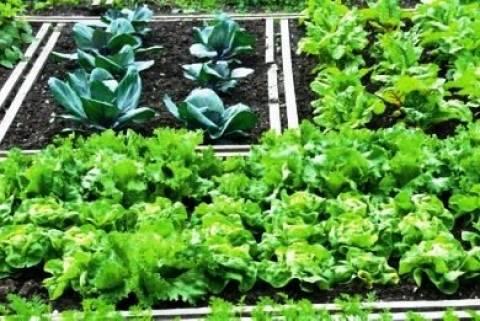 Απίστευτο! Πρόστιμο για λαχανόκηπο...