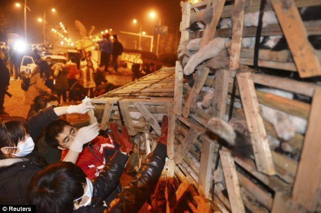 ΣΟΚ: Σώθηκαν 1000 γάτες που προορίζονταν για... φαγητό στην Κίνα
