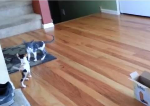 Βίντεο: Δείτε την αποτυχημένη προσπάθεια μίας γάτας στο παρκούρ!