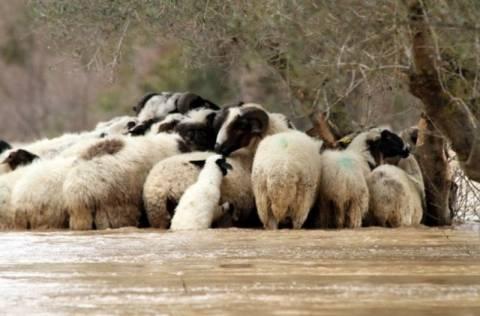 Εικόνες βιβλικής καταστροφής στην Ηλεία
