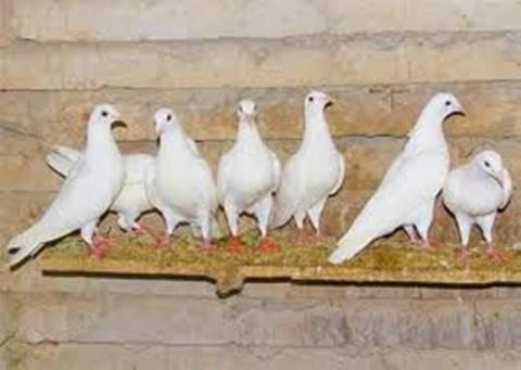 Φιλοξενούσε στο σπίτι του 300 ζώα! Ανυπόφορη δυσωδία για τους γείτονες