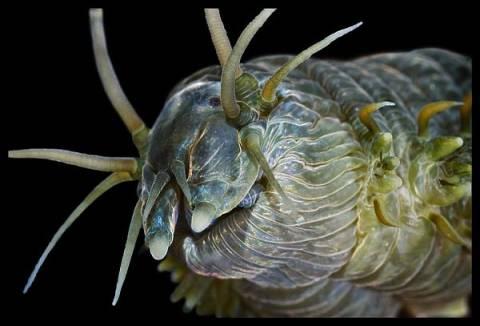 Τα alien των θαλασσών (pics)