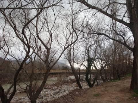 Επιδρομές στα πάρκα της Ξάνθης για καυσόξυλα