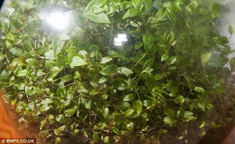 Απίστευτο: Το φυτό που επιβιώνει δίχως αέρα και νερό εδώ και 40 χρόνια