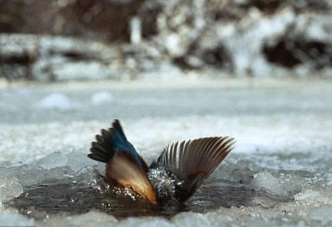 Δείτε τον συγκλονιστικό αγώνα ενός πτηνού να επιβιώσει!