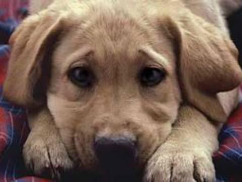 Εισαγγελείς, νομικοί, φιλόζωοι για τα εγκλήματα εις βάρος των ζώων