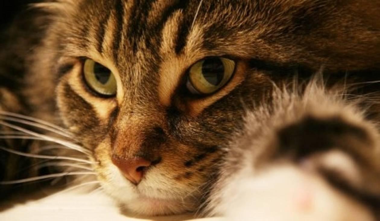 Απίστευτο! Οι κατοικίδιες γάτες απειλούν το οικοσύστημα της Γης
