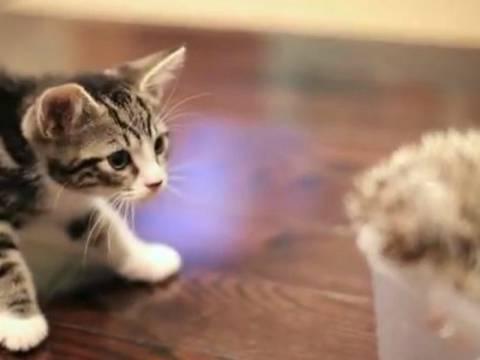 Γλυκό βίντεο: Σκατζόχοιρος και γάτα οι καλύτεροι φίλοι!
