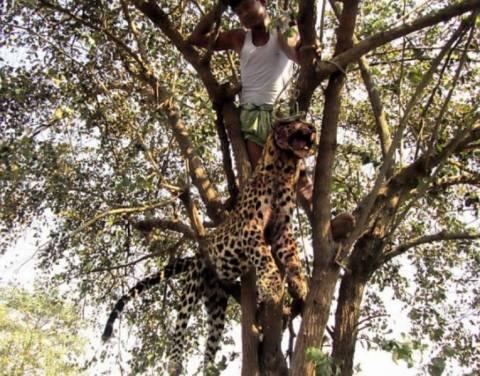 Κρέμασαν λεοπάρδαλη που επιτέθηκε σε ανθρώπους(pics)