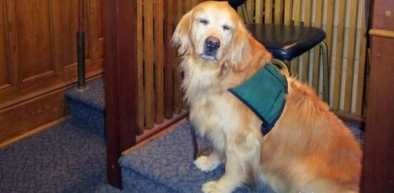 Σκύλος βοήθησε 15χρονο θύμα βιασμού στη δίκη!