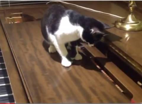 Βίντεο: Δείτε την αντίδραση μίας γάτας στο άκουσμα μουσικών νοτών!