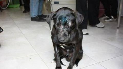 ΣΟΚ στη Σαμοθράκη: Έδεσαν σκύλο με πέτρες και τον πέταξαν στη θάλασσα