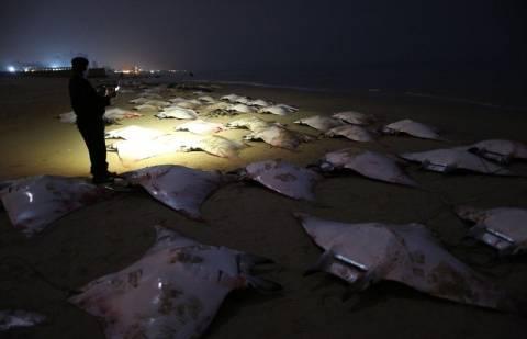 Δεκάδες σαλάχια ξεβράστηκαν σε παραλία της Γάζας