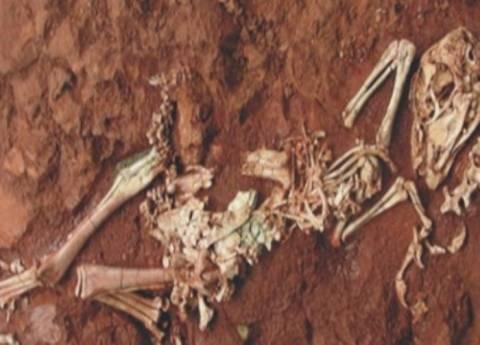 Aνακάλυψαν σκελετό από δεινόσαυρο-μινιατούρα