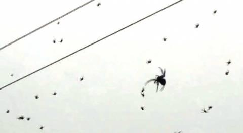Βίντεο: Βροχή από αράχνες στη Βραζιλία!