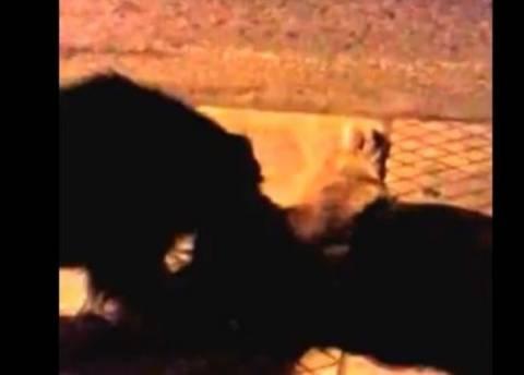Σκύλος κλαίει για την «κολλητή» του που χτυπήθηκε στο δρόμο (βίντεο)